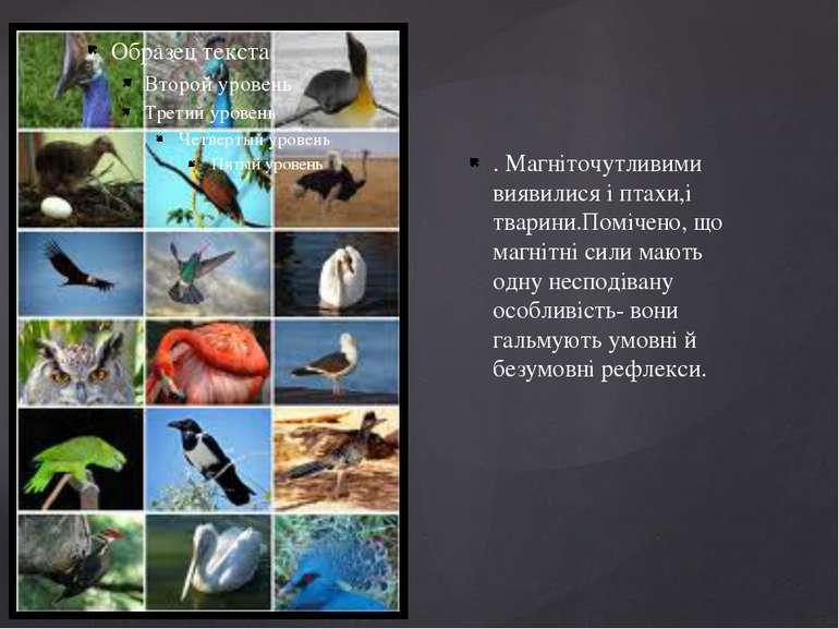 . Магніточутливими виявилися і птахи,і тварини.Помічено, що магнітні сили маю...
