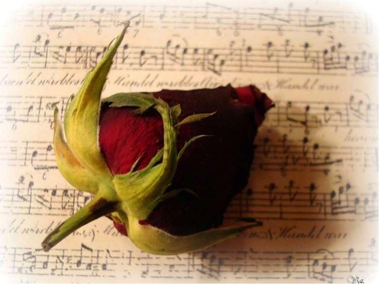 Збірка «Сатурнічні поезії»