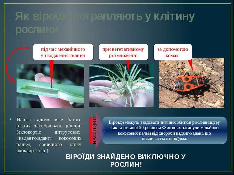 Як віроїди потрапляють у клітину рослини Наразі відомо вже багато різних захв...