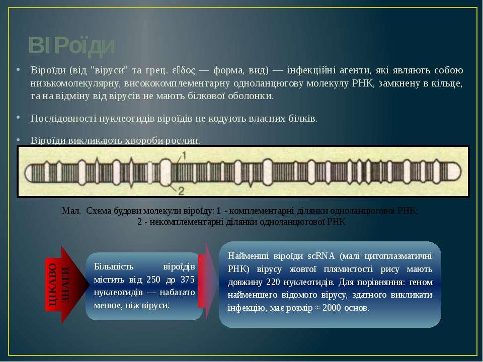 """ВІРоїди Віроїди (від """"віруси"""" та грец. εἶδος — форма, вид) — інфекційні агент..."""