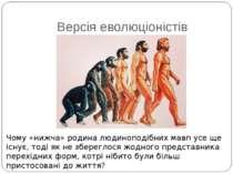 Версія еволюціоністів Чому «нижча» родина людиноподібних мавп усе ще існує, т...