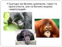 Сьогодні ми бачимо шимпанзе, горил та орангутангів, але не бачимо жодних «мав...
