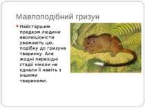 Мавпоподібний гризун Найстаршим предком людини еволюціоністи уважають цю, под...