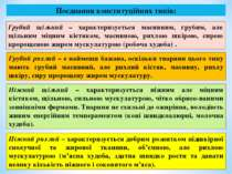 Поєднання конституційних типів: Грубий щільний – характеризується масивним, г...