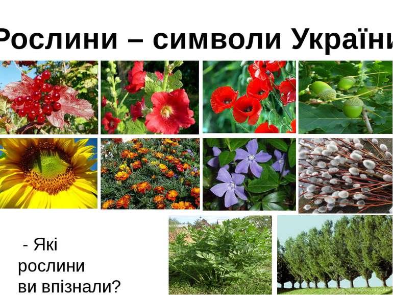 Рослини – символи України - Які рослини ви впізнали?