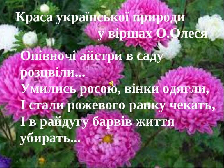 Опівночі айстри в саду розцвіли... Умились росою, вінки одягли, І стали рожев...