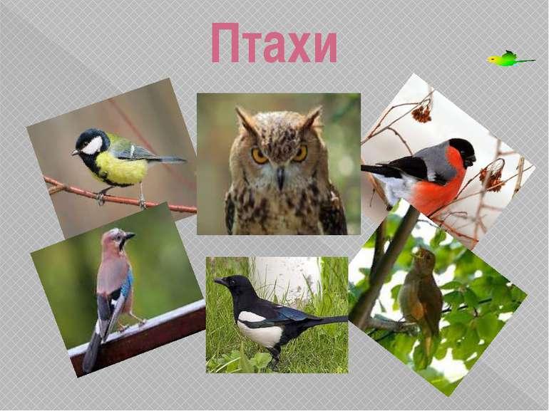 Птахи Павлюк Валентина Миколаївна