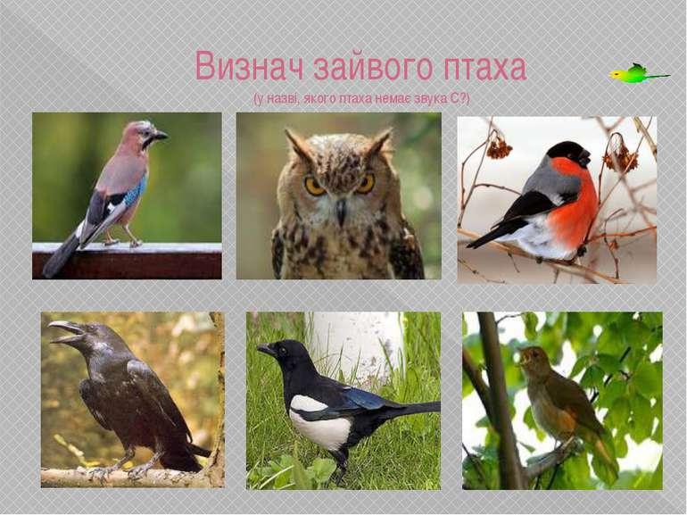 Визнач зайвого птаха (у назві, якого птаха немає звука С?) Ворона, у назві не...