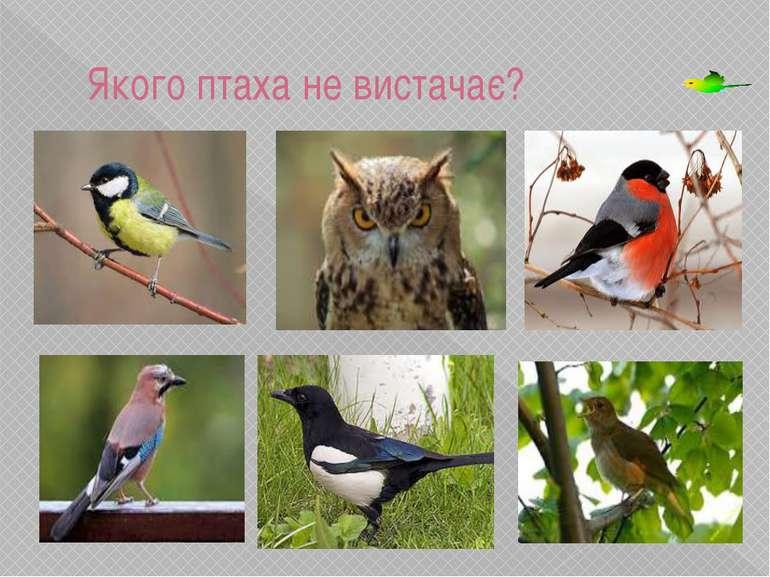 Якого птаха не вистачає? Розвиток зорової уваги та пам'яті. Розвиток зорової ...