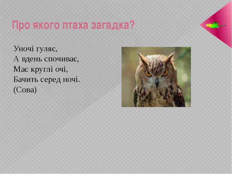 Про якого птаха загадка? Уночі гуляє, А вдень спочиває, Має круглі очі, Бачит...
