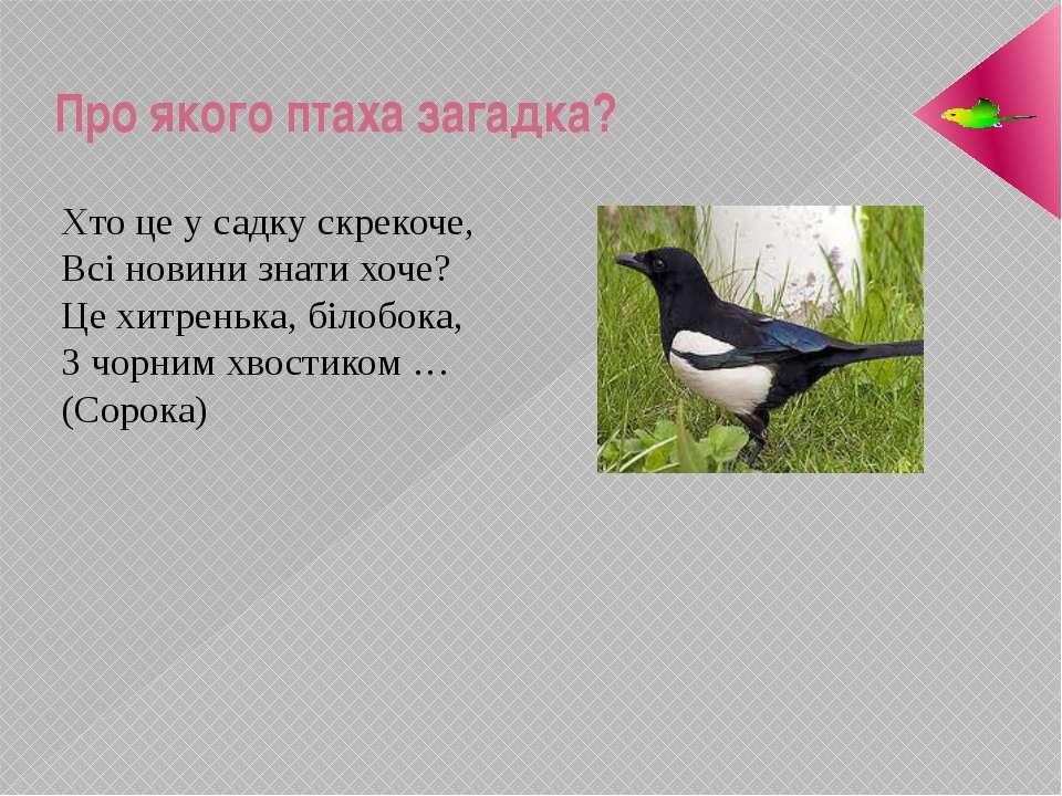 Про якого птаха загадка? Хто це у садку скрекоче, Всі новини знати хоче? Це х...