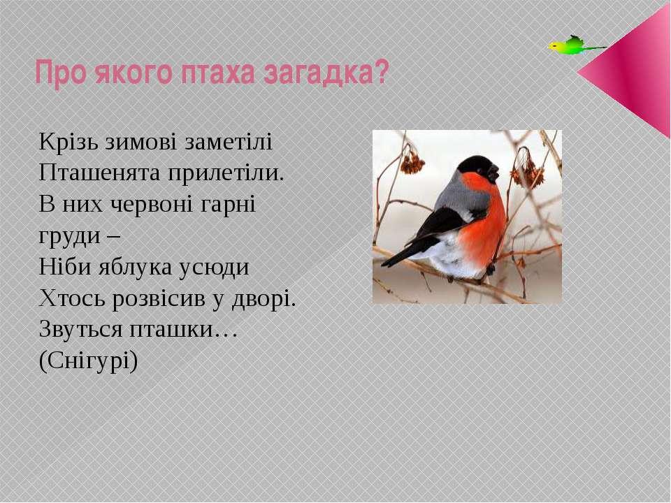 Про якого птаха загадка? Крізь зимові заметілі Пташенята прилетіли. В них чер...