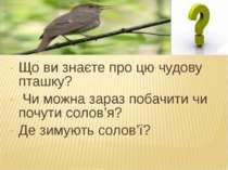 Що ви знаєте про цю чудову пташку? Чи можна зараз побачити чи почути солов'я?...