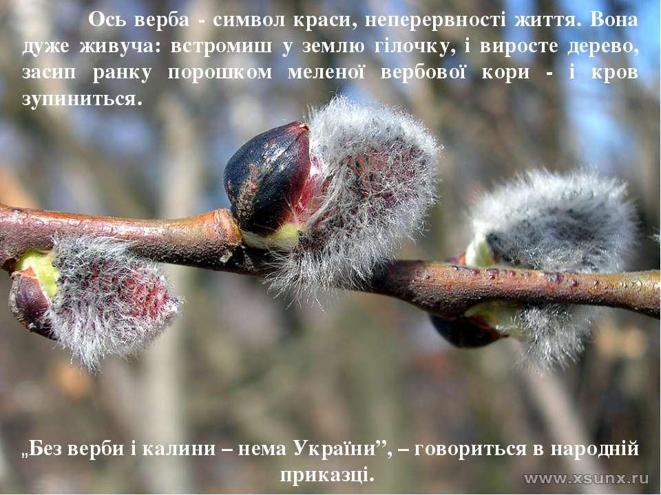 Ось верба - символ краси, неперервності життя. Вона дуже живуча: встромиш у з...