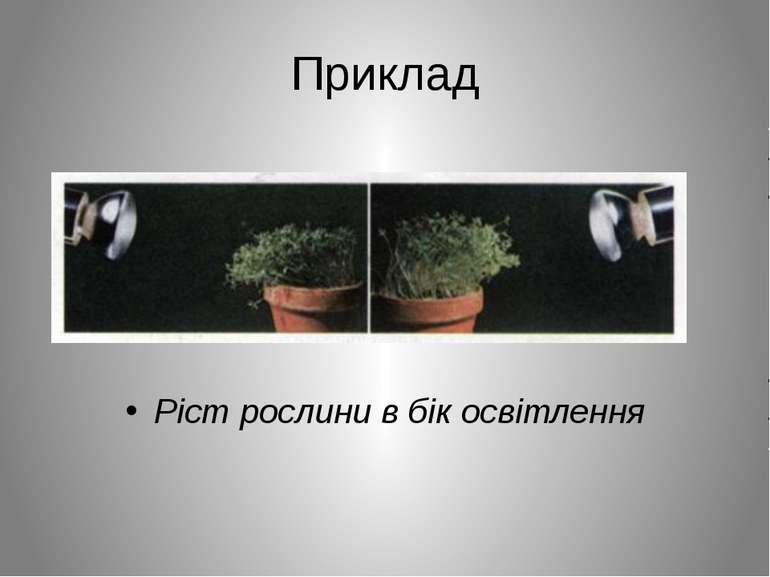 Приклад Ріст рослини в бік освітлення