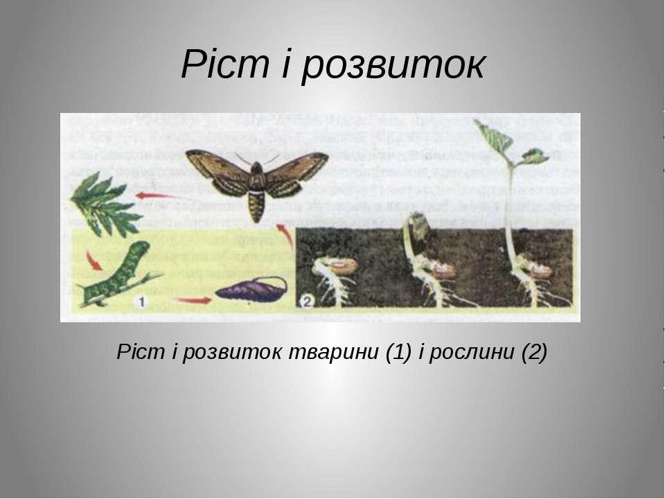 Ріст і розвиток Ріст і розвиток тварини (1) і рослини (2)