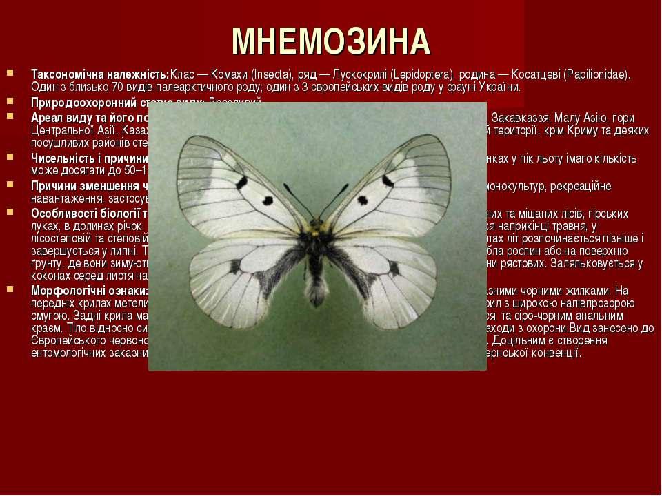 МНЕМОЗИНА Таксономічна належність:Клас — Комахи (Insecta), ряд — Лускокрилі (...