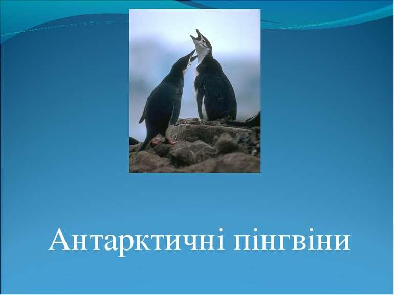 Антарктичні пінгвіни
