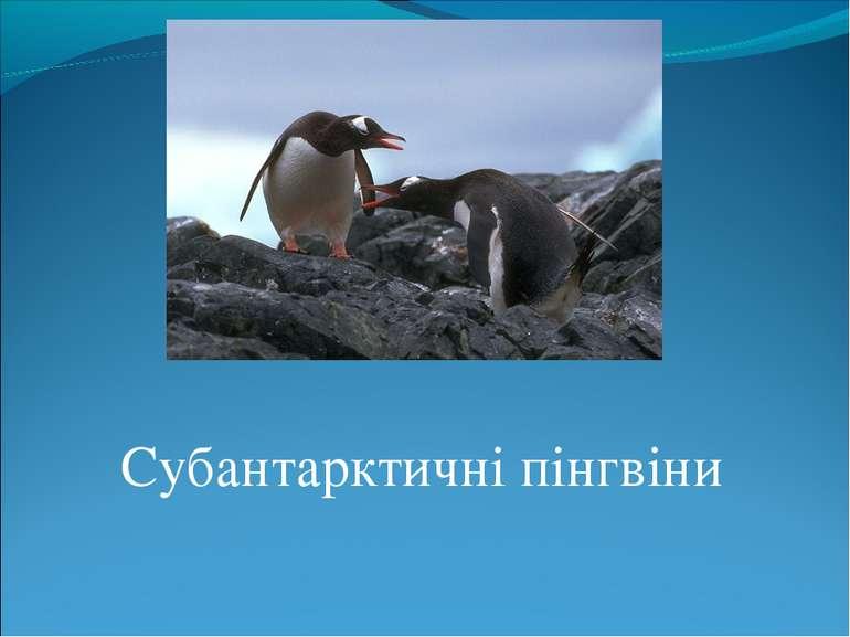 Субантарктичні пінгвіни