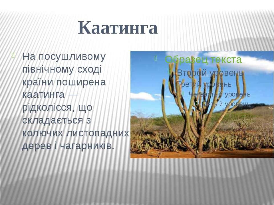 Каатинга На посушливому північному сході країни поширена каатинга — рідколісс...