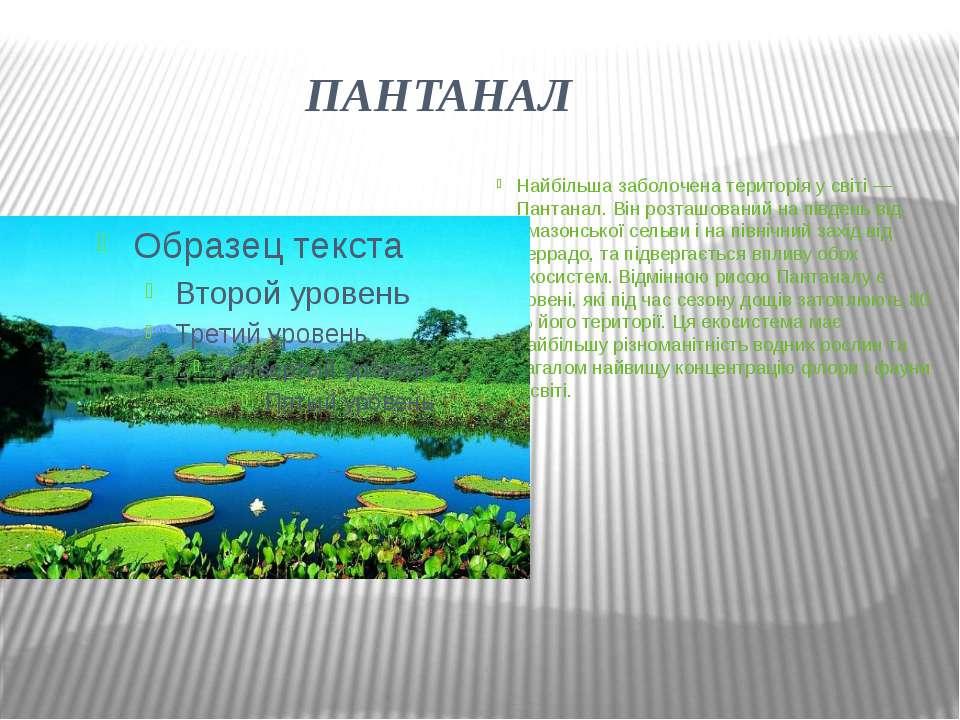 ПАНТАНАЛ Найбільша заболочена територія у світі — Пантанал. Він розташований ...