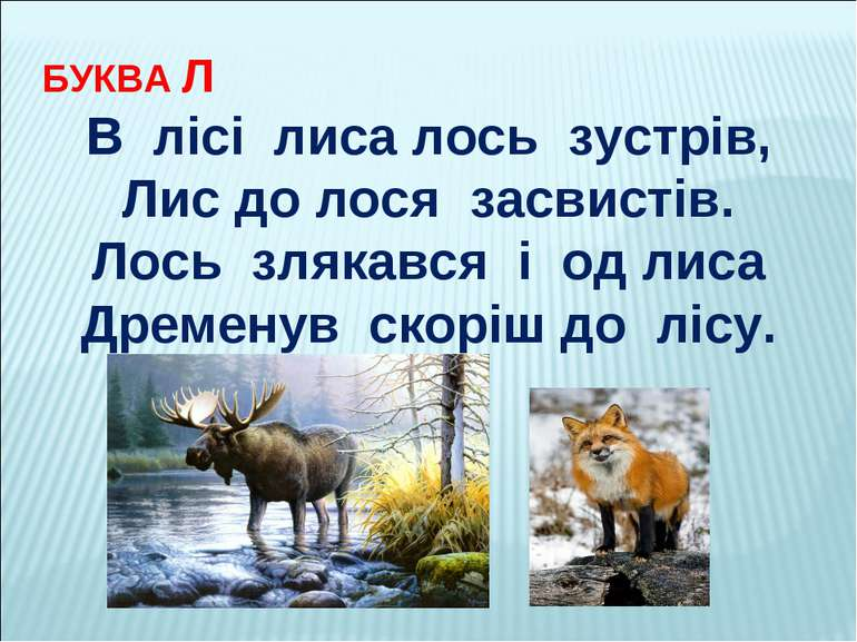 БУКВА Л В лісі лиса лось зустрів, Лис до лося засвистів. Лось злякався і од л...