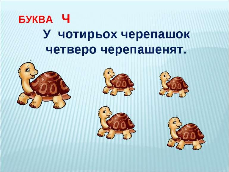 БУКВА Ч У чотирьох черепашок четверо черепашенят.