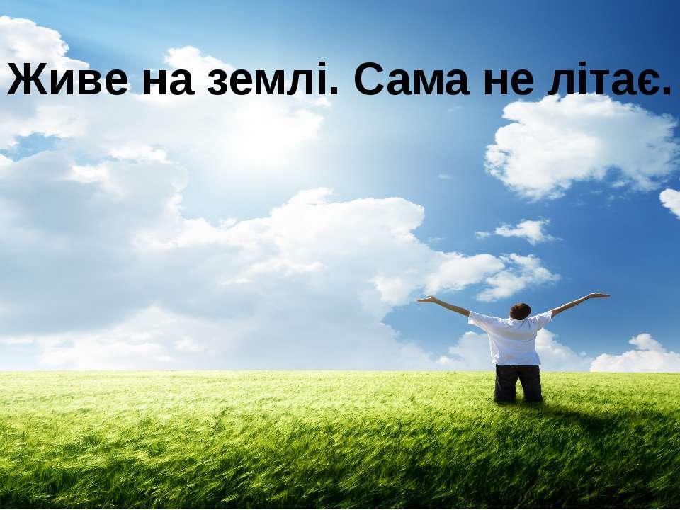 Живе на землі. Сама не літає.