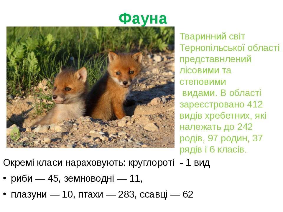 Фауна Окремі класи нараховують: круглороті - 1 вид риби— 45, земноводні— 1...