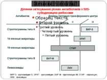 Ділянки зв'язування різних антибіотиків з 50S-субодиницею рибосоми ВИР-S - ві...