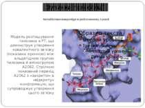 Антибіотики-макроліди в рибосомному тунелі Модель розташування тилозина в РТ,...