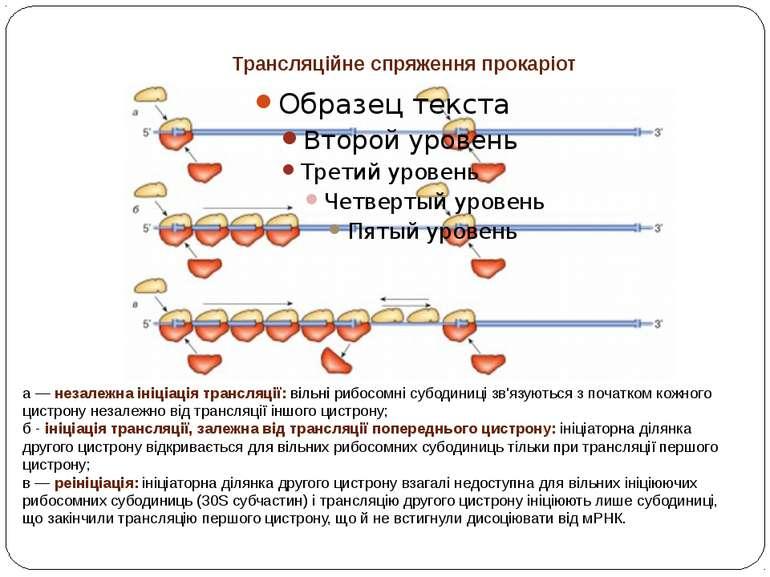 Трансляційне спряження прокаріот а — незалежна ініціація трансляції: вільні р...