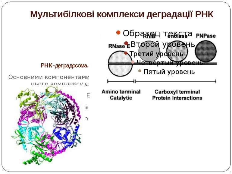 Мультибілкові комплекси деградації РНК РНК-деградосома. Основними компонентам...