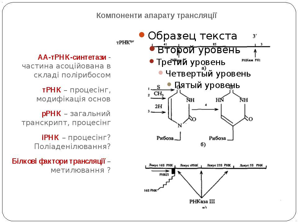 Компоненти апарату трансляції АА-тРНК-синтетази - частина асоційована в склад...