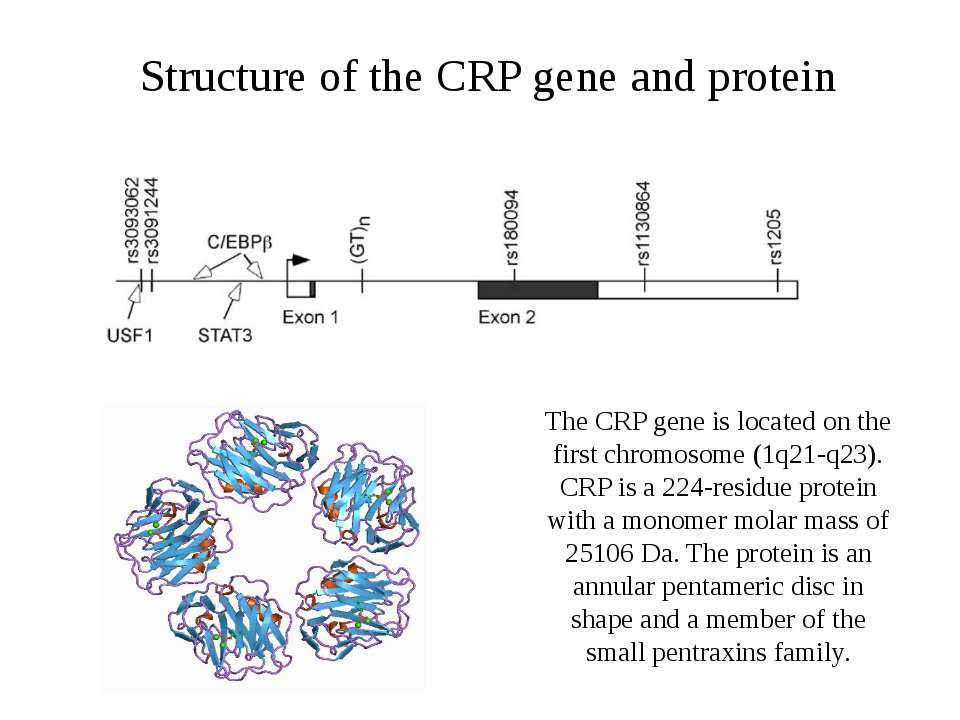 Structure of the CRP gene and protein The CRP gene is located on the first ch...