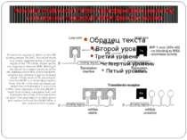 Регуляція стабільності mRNA трансферинового рецептору та активності трансляці...