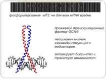 Тотальна регуляція у еукаріот