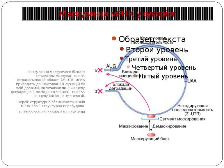 Маскування мРНК у еукаріот Зв'язування маскуючого білка із сегментом маскуван...