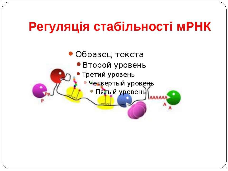 Регуляція стабільності мРНК