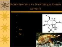 Конотоксини як блокатори іонних каналів cone snails - конусоподібні равлики К...