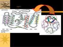 Структура AQP-1