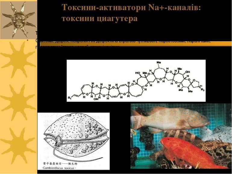 Токсини цигуатера продукуються Gamberdiscus, але акумулюються в тілі коралови...