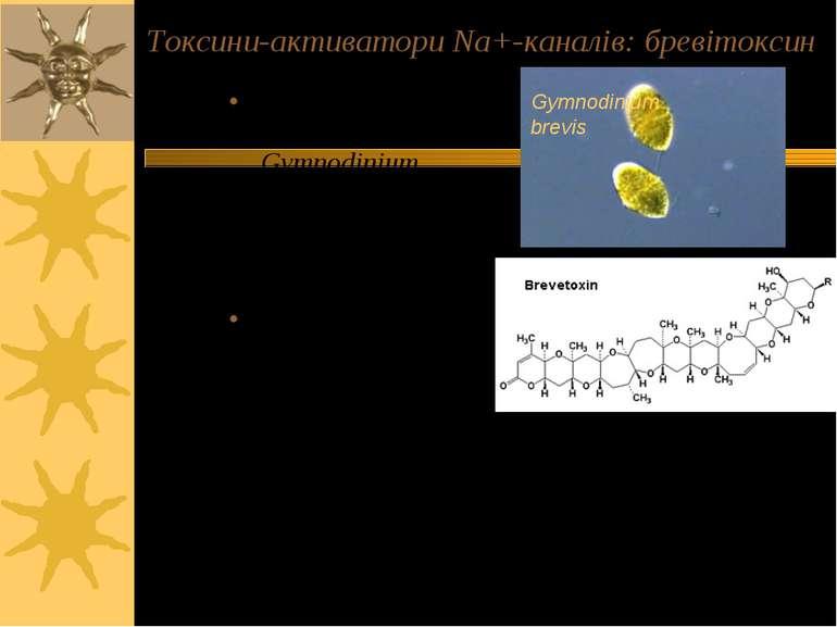 Токсини-активатори Na+-каналів: бревітоксин Продуцент: дінофлагелят Gymnodini...