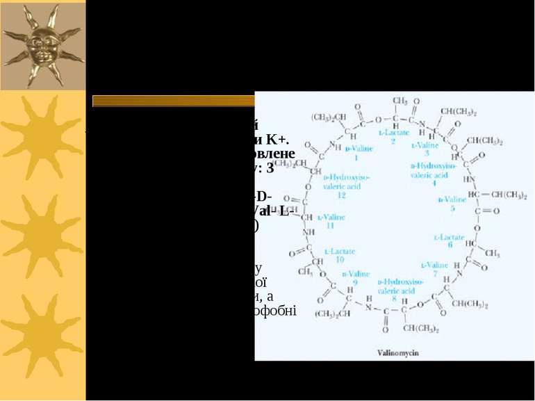 Валіноміцин – пептидне кільце, що переносить іони К+ через ПМ Валіноміцин – ц...