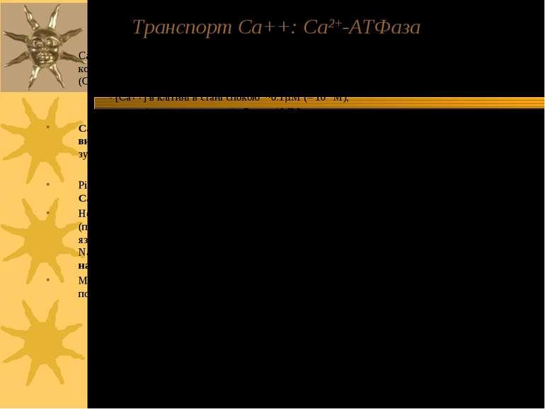 Транспорт Са++: Ca2+-ATФаза Ca++-ATФаза локалізована у ПМ та ЕР (або СР). ЇЇ ...