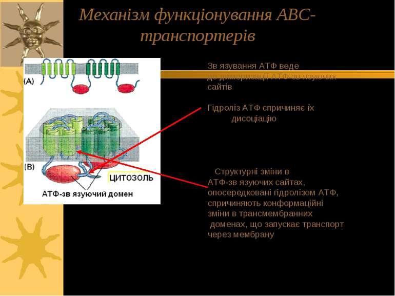 Зв язування АТФ веде до димеризації АТФ-зв язуючих сайтів Гідроліз АТФ спричи...