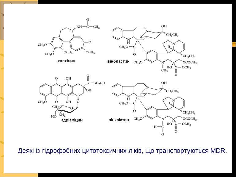 Деякі із гідрофобних цитотоксичних ліків, що транспортуються MDR.