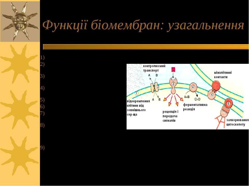 Функції біомембран: узагальнення Бар єрна функція (ПМ) Трансмембранні рухи ре...