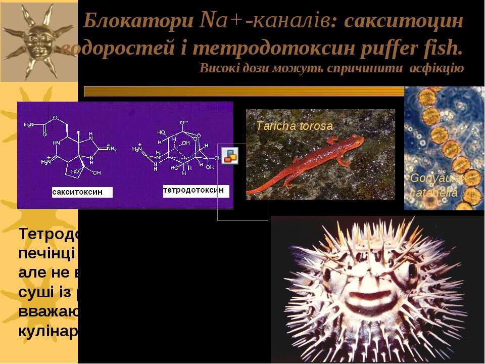 Блокатори Na+-каналів: сакситоцин водоростей і тетродотоксин puffer fish. Вис...