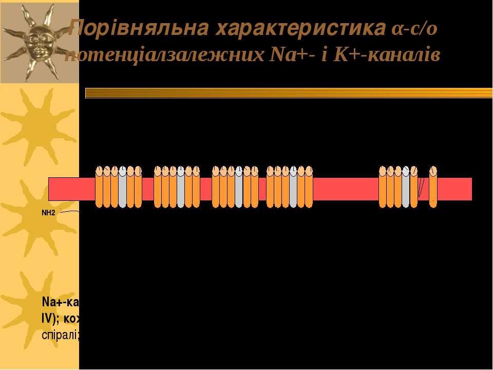 Порівняльна характеристика α-с/о потенціалзалежних Na+- і К+-каналів Na+-кана...